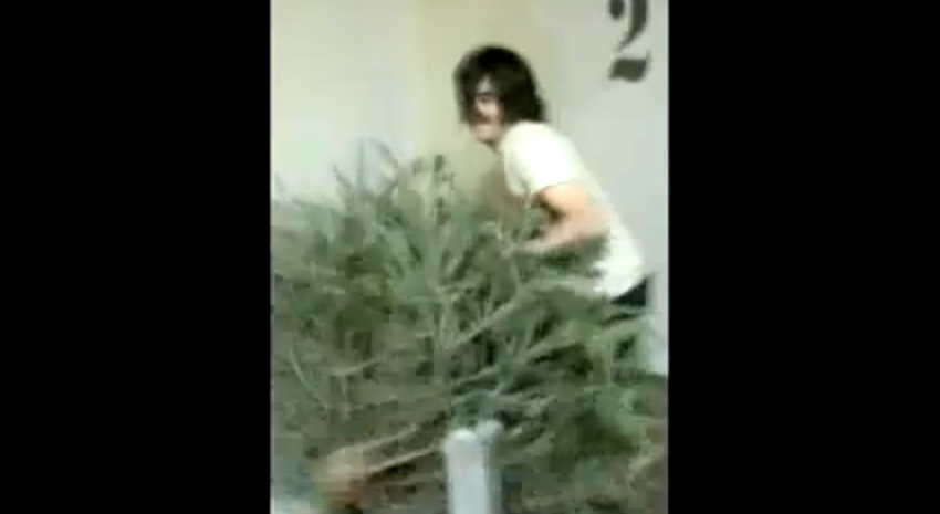 The Great Christmas Tree Removal